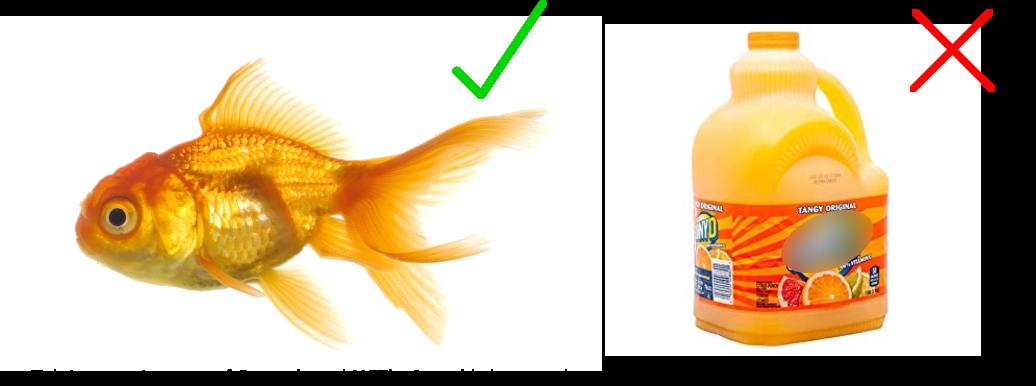 Fish is better than orange juice!