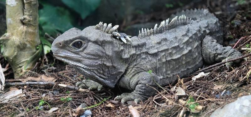 6 Unique Wildlife Species You'll Encounter in New Zealand