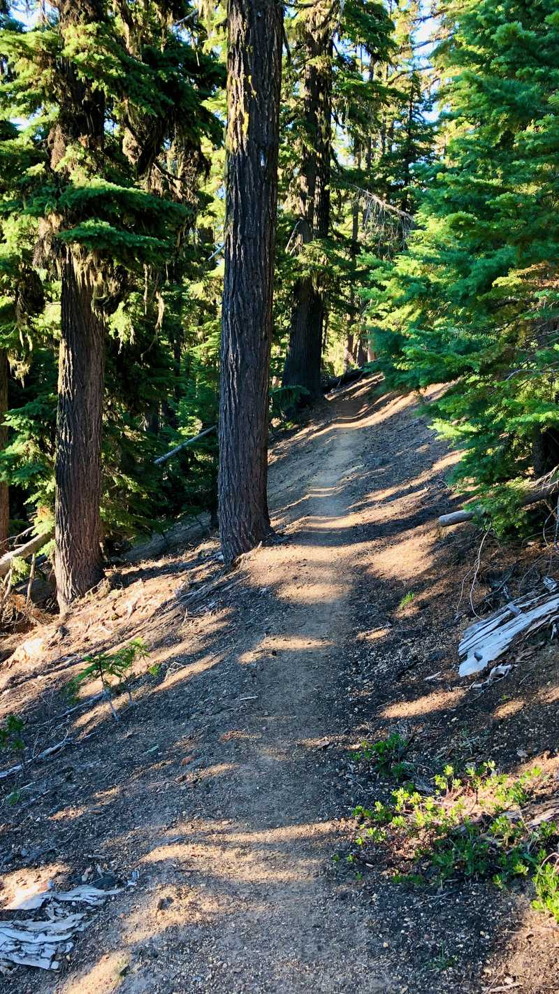 A smooth footpath on the Pacific Crest Trail