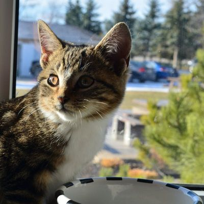 best-cat-boarding-facility