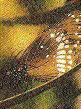 My Life - The Tale of a Butterfly