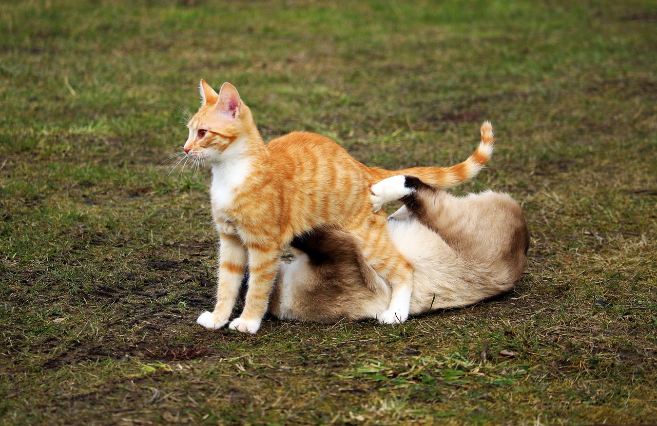 Cats in a sloppy mount position