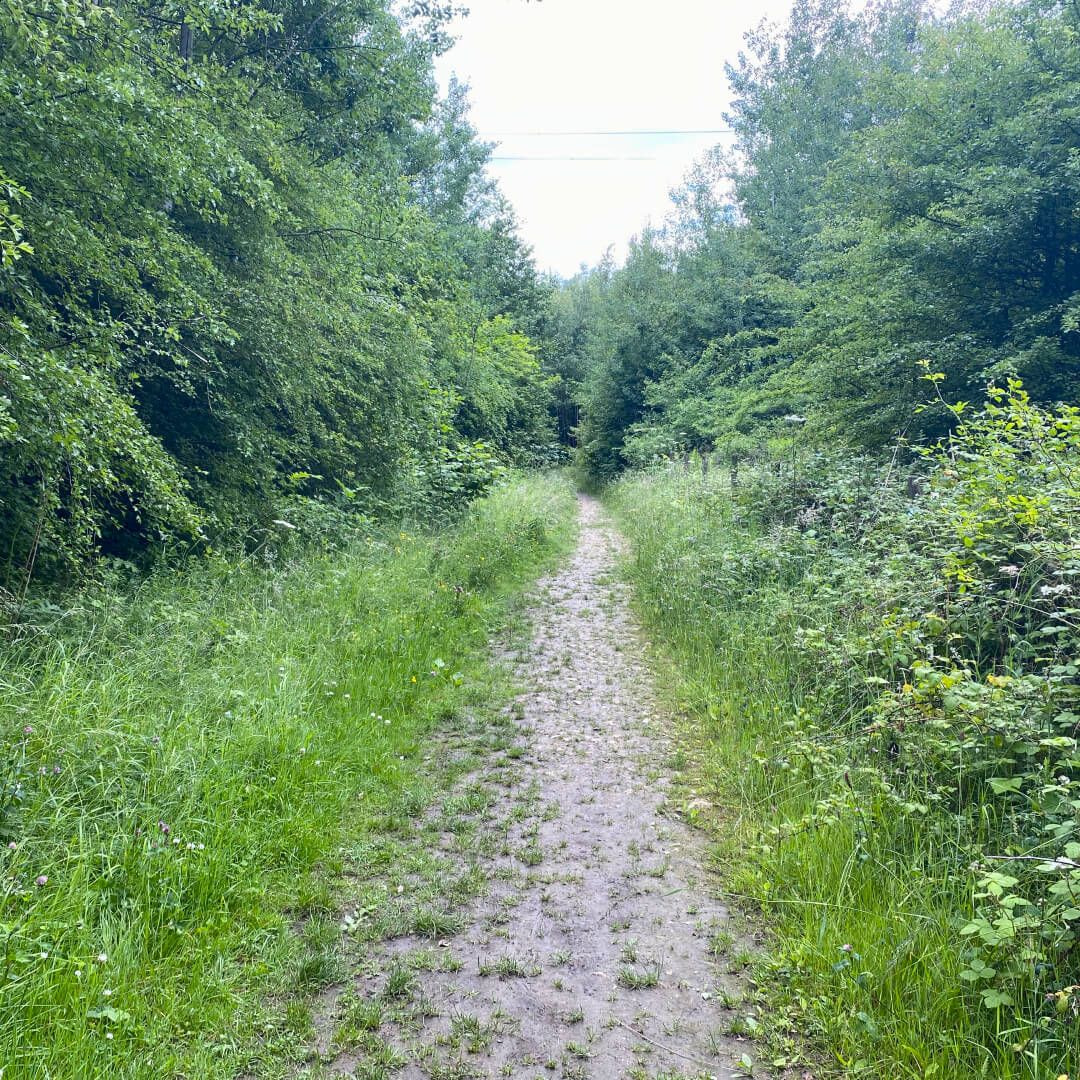 Kirkstall Valley Nature Reserve path