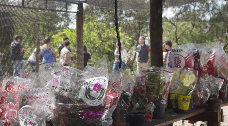 Imagem em destaque para o artigo: Oficina de Horticultura - Centro de Atendimento e Inclusão Social (CAIS)