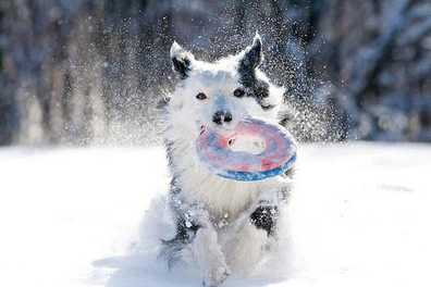 Paw-Friendly Winter Weather Solutions