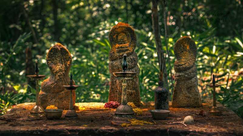 Naga idols in Sarppakkavu