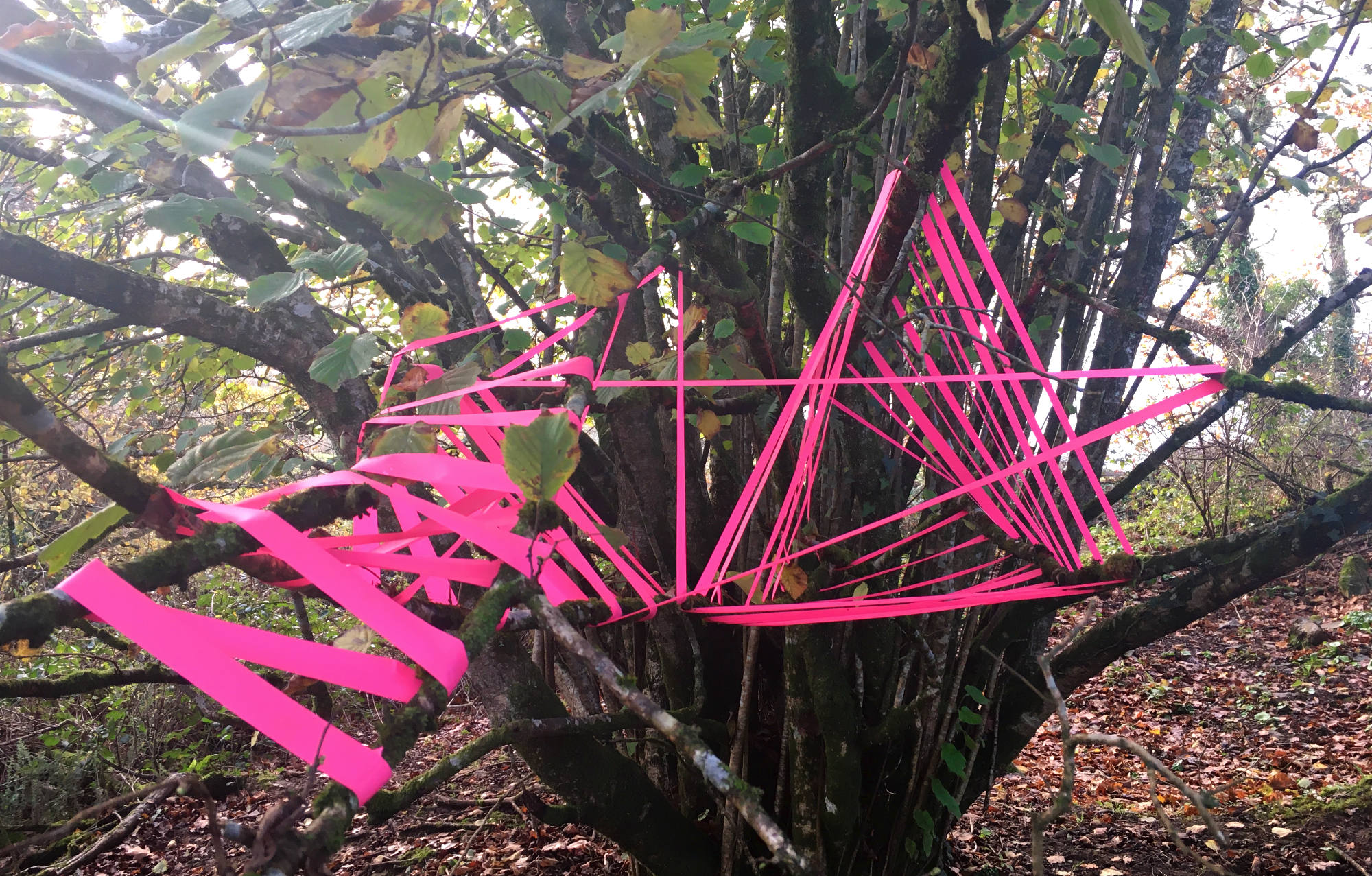 triangles-in-tree