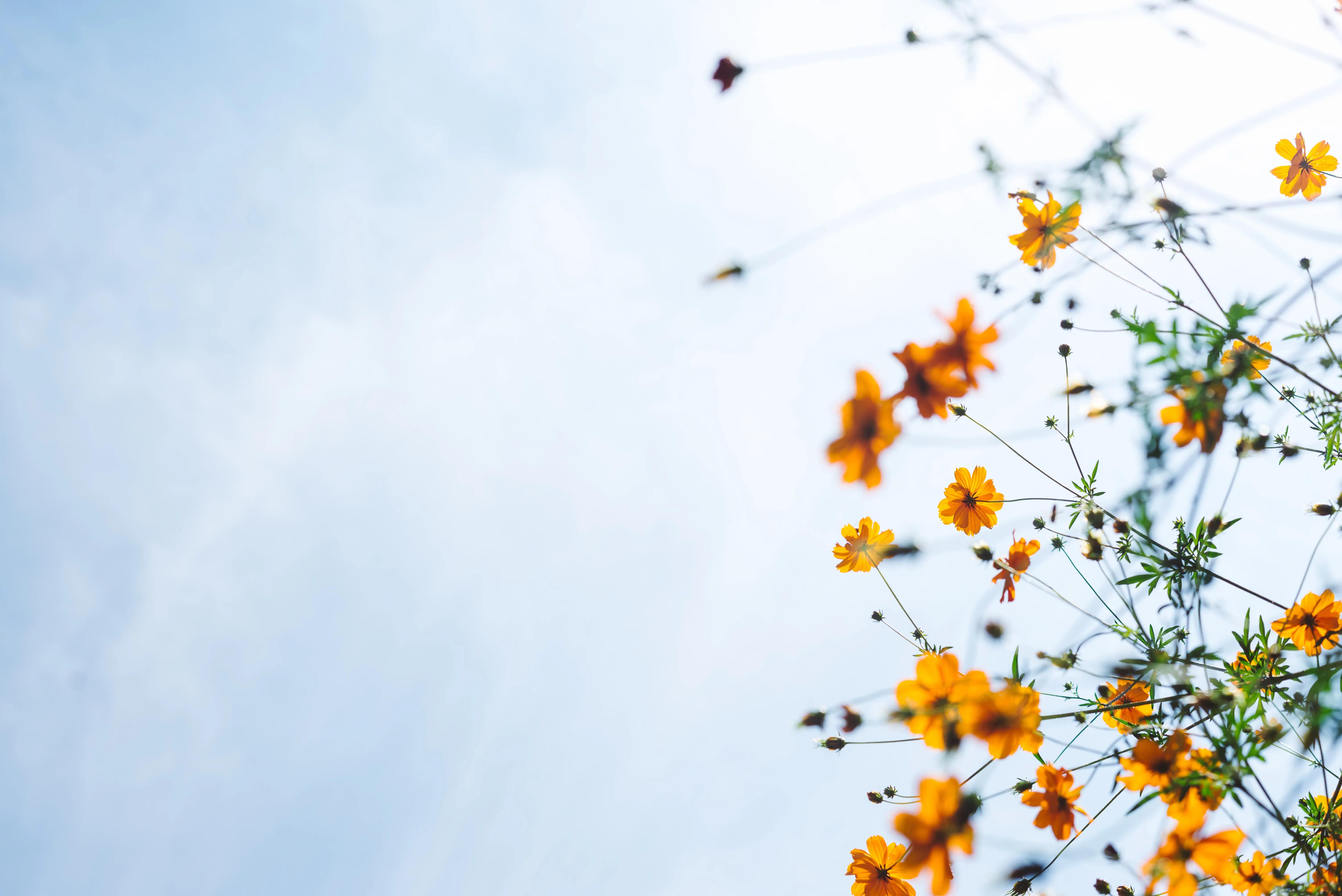 Image of: beautiful plant & white background