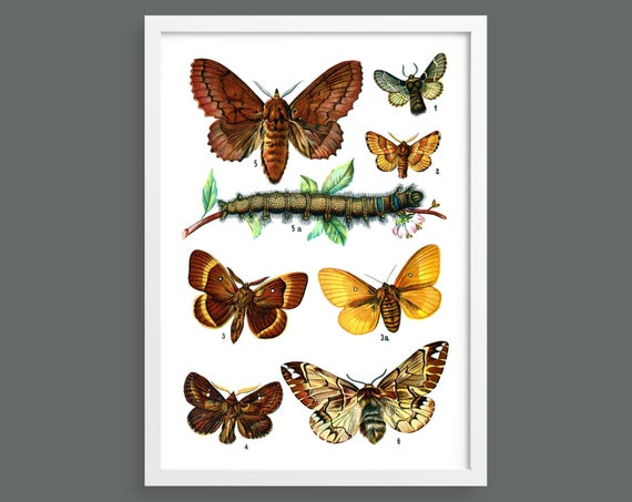 Botanical butterfly poster 8
