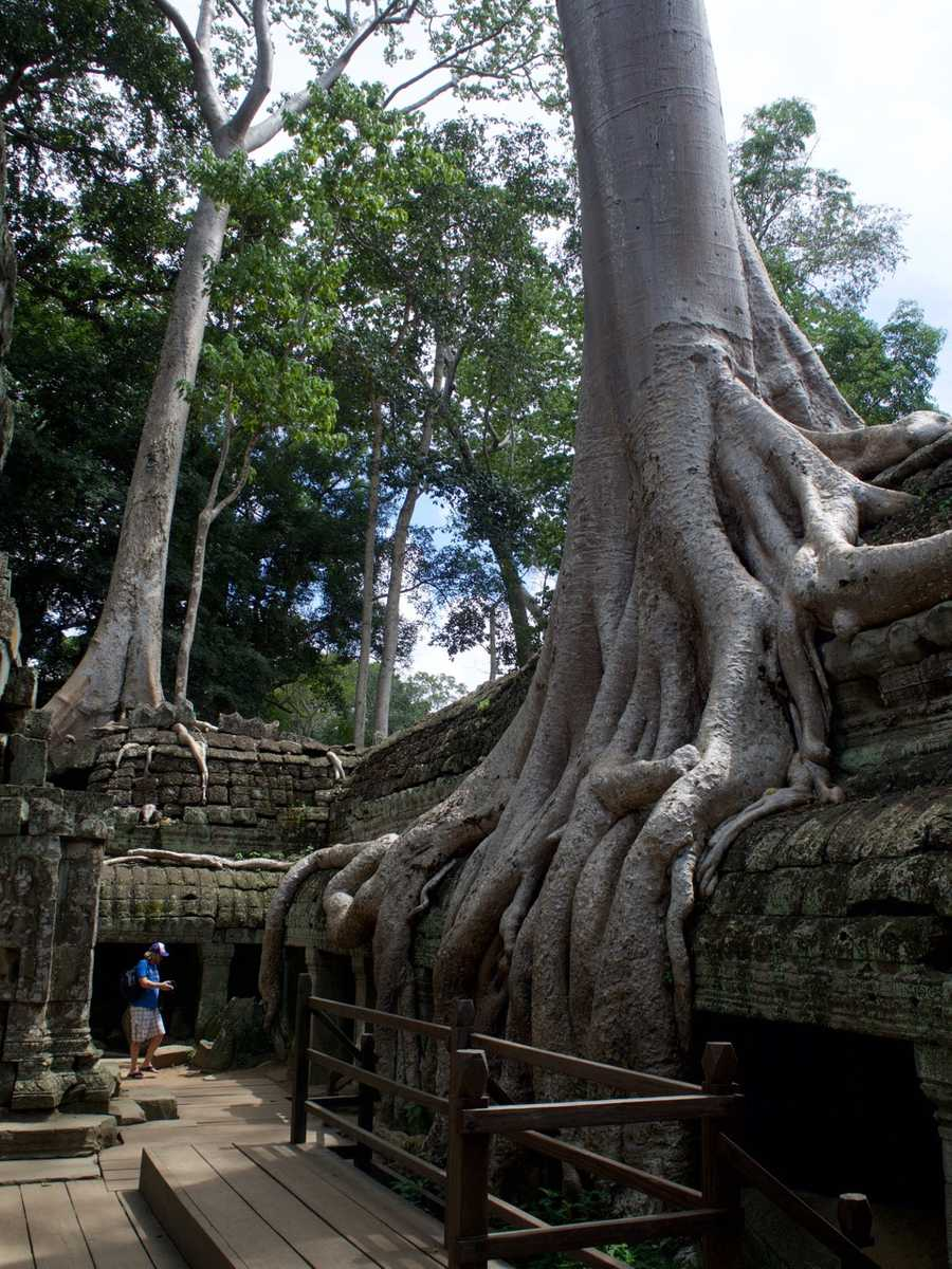 Roots taking over the temple