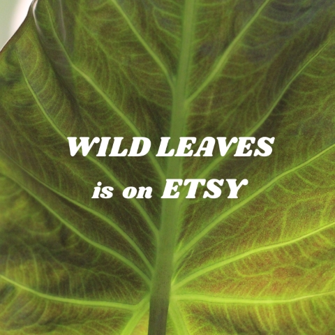 Shop Wild Leaves