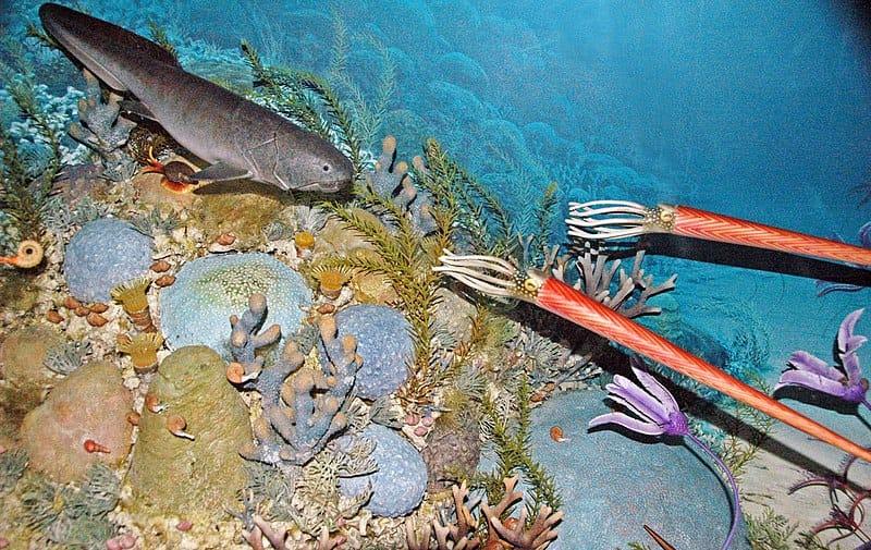 Diorama de um antigo leito marinho durante o Devoniano. Esta é uma exposição pública no Museu das Montanhas Rochosas em Bozeman, Montana. Os animais representados incluem cefalópodes de casca reta e espiralada, crinóides, corais solitários e coloniais, um placoderme artrodire e algas.