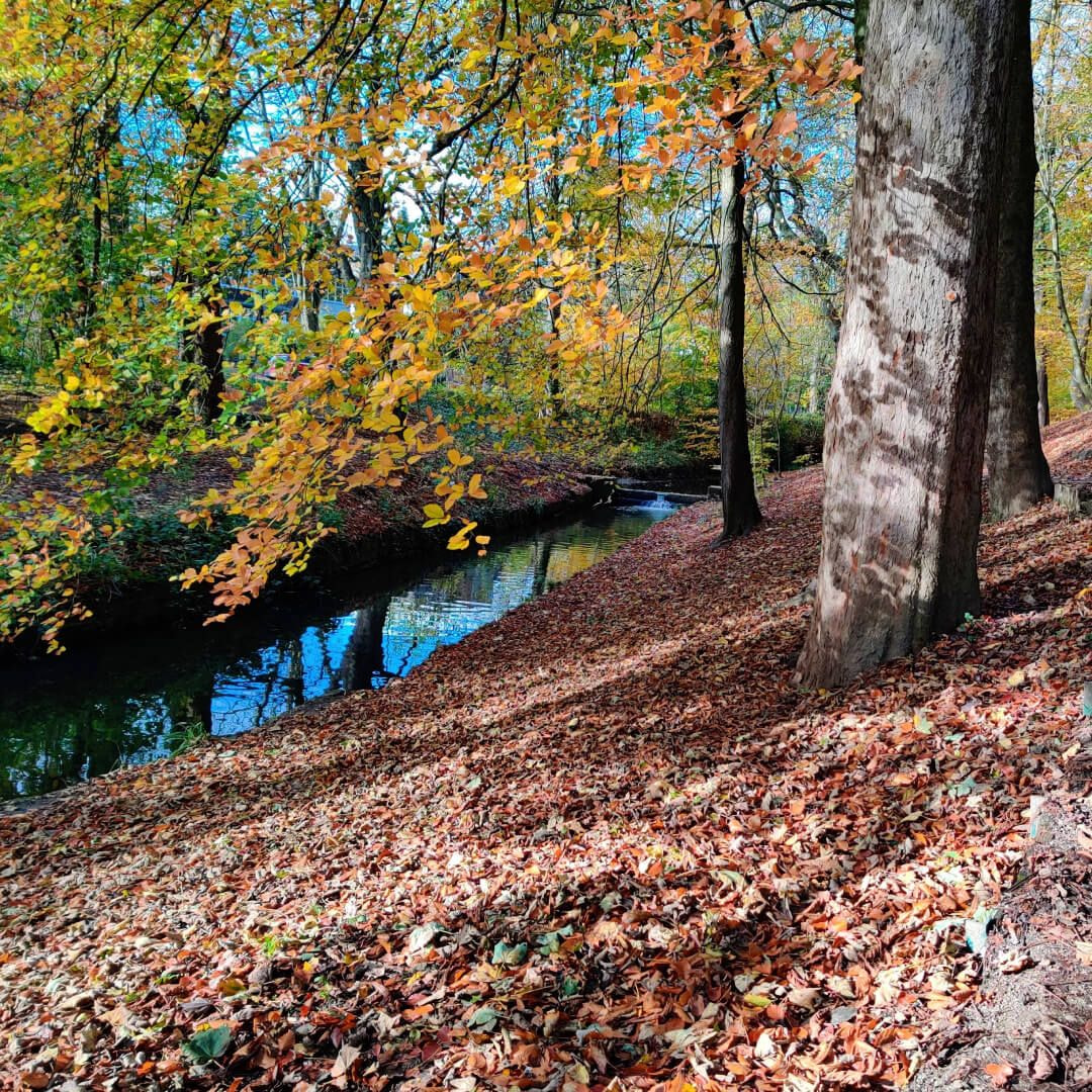 Gledhow Valley Woods in Autumn, small stream runs along the bottom