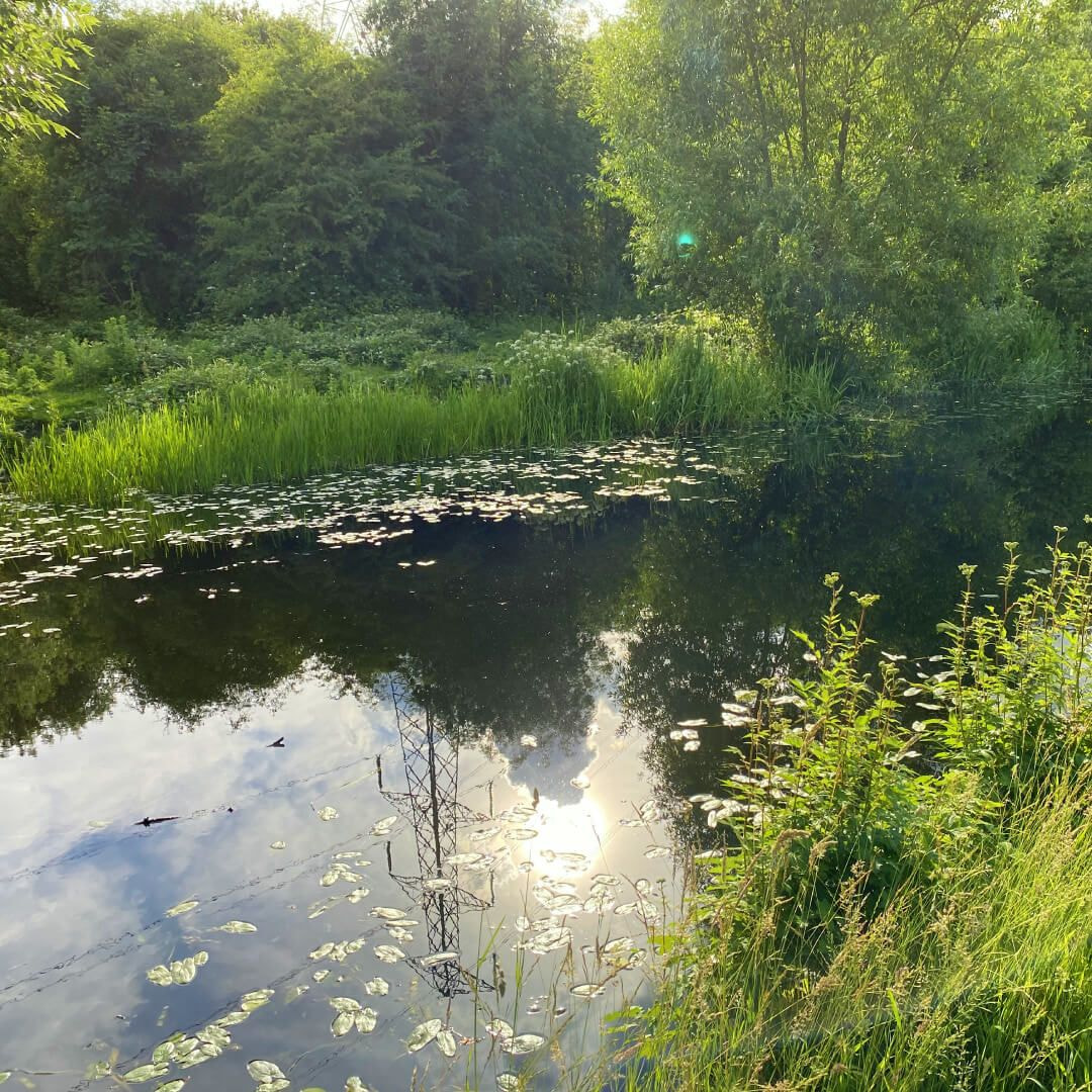 Bramley Fall Woods canal in sunshine