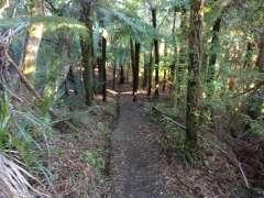 Nice descent through forest
