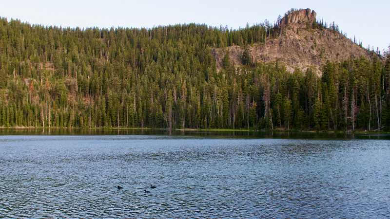 Ducks swimming in Lower Rosary Lake below The Pulpit