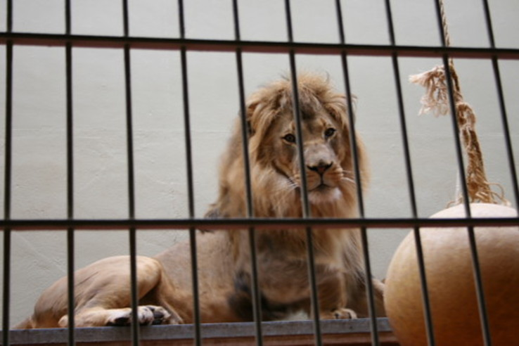 You won't believe what happens when all the animals run away from the zoo.