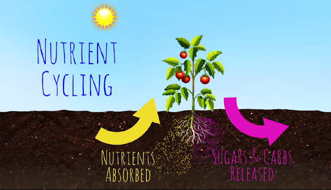 Nutrient Cycling Graphic from SoilFoodWeb.com