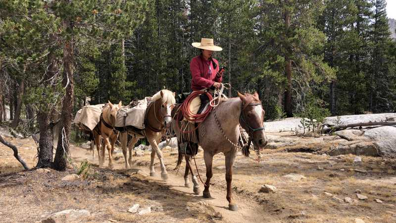 Horses from Muir Trail Ranch