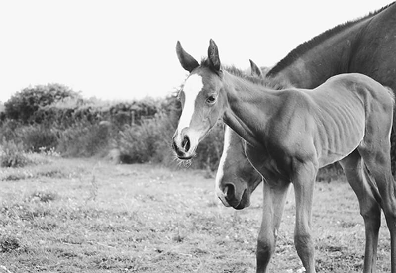 Any foal's a goal; Choosing a stallion