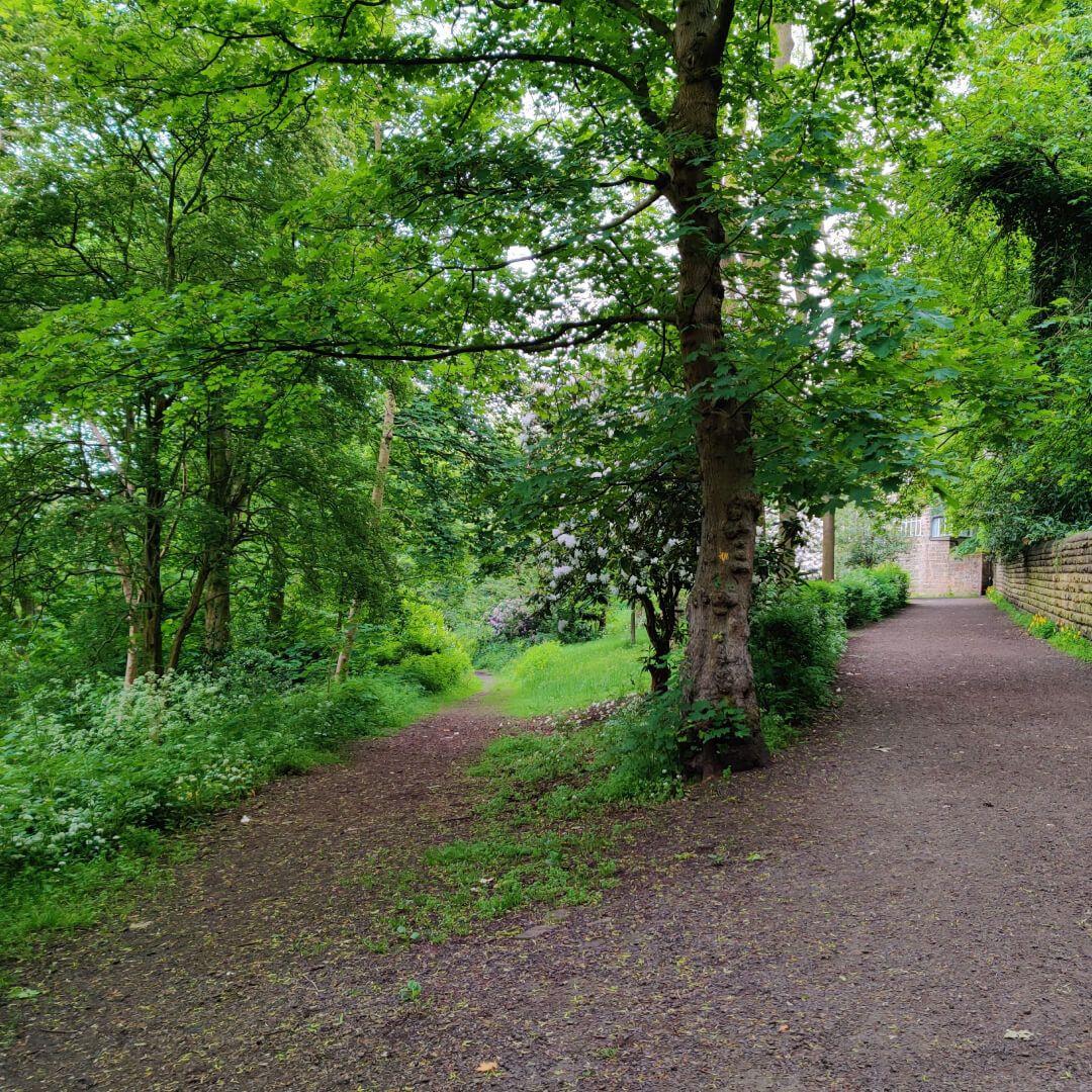 Woodhouse Ridge top path split