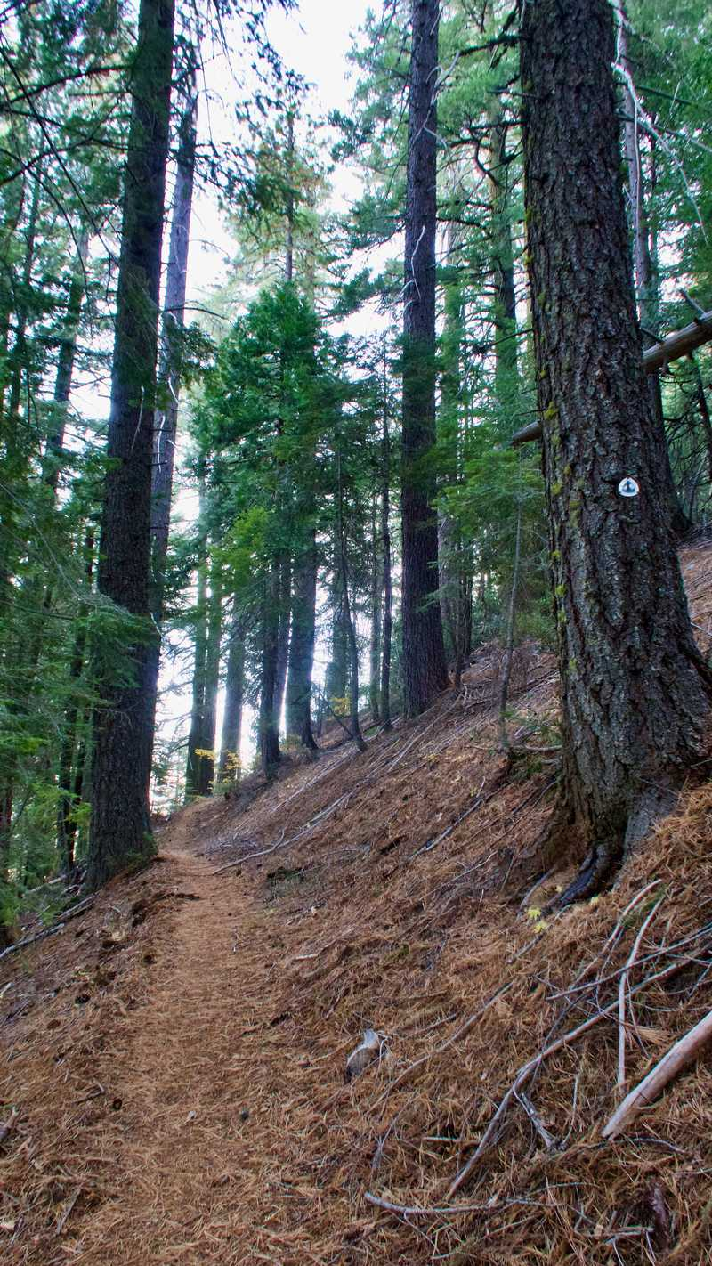 The PCT climbs through a forest