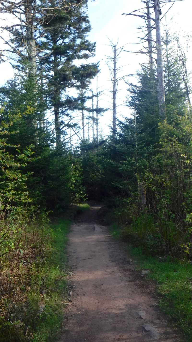 Fir-spruce forest
