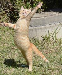 Piccoli gattini crescono