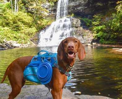 5 Benefits of a Dog Backpack