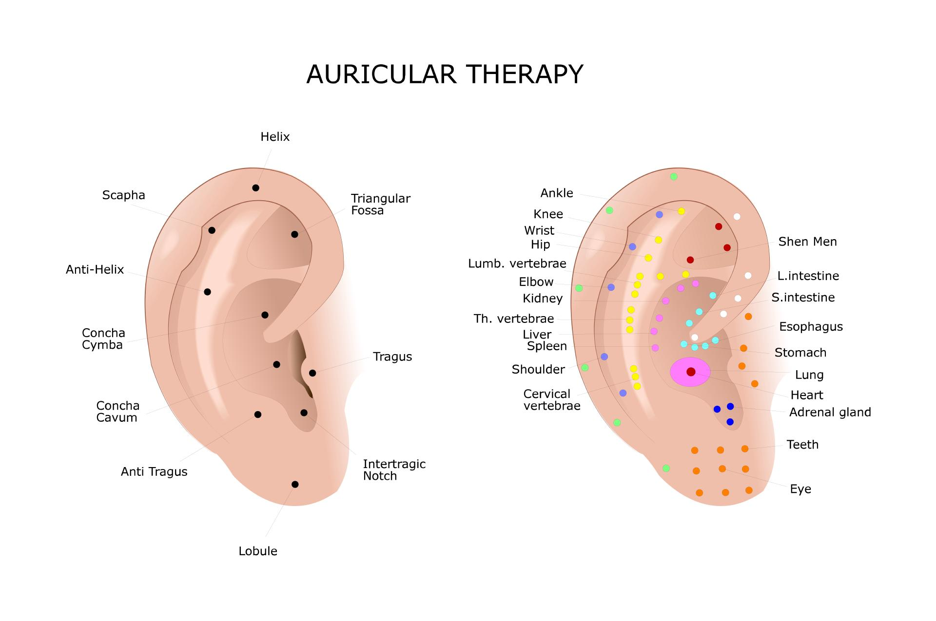Experience the magical power of ear acupuncture}