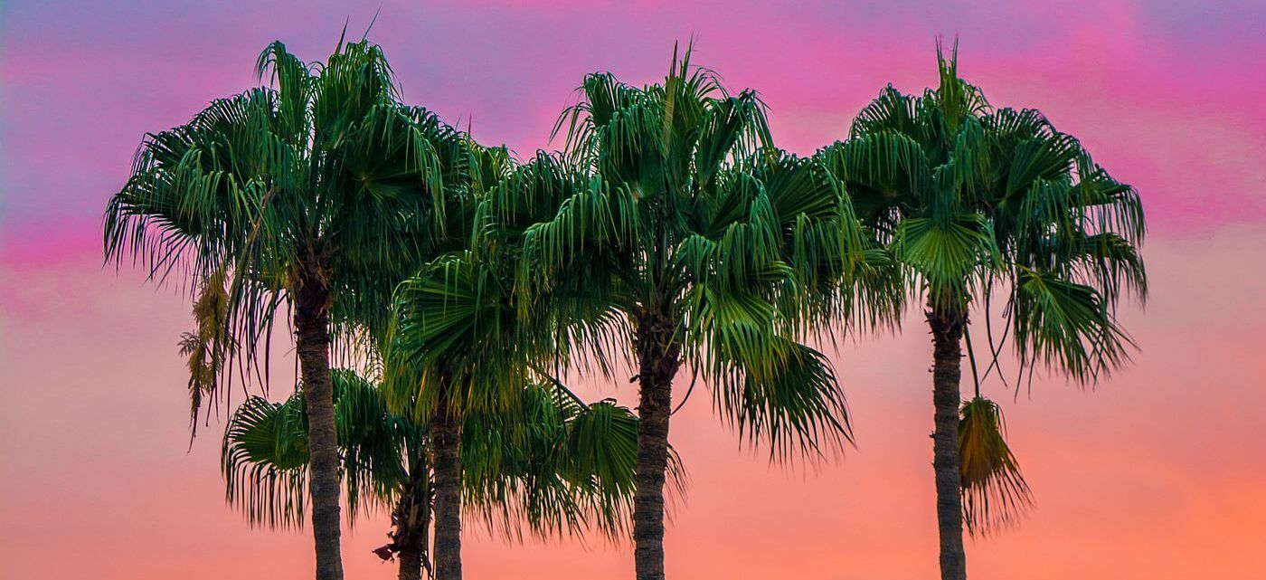 Palm trees in Spain by Adam Birkett @ Unsplash