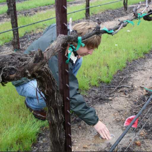 Vineyard Drip Irrigation System Startup