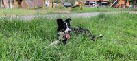 Nina, con la lengua de fuera, acostada en el parque sobre el pasto
