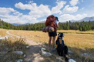 Tips for Camping with Canines