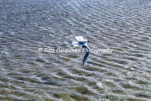 Bird Flying over the Lake in the New Forest