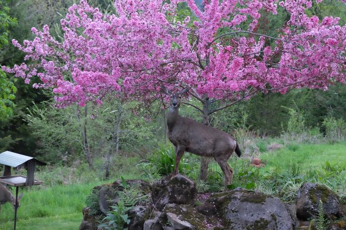 Derpy Deer