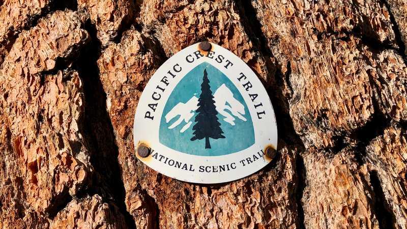 A PCT emblem nailed to a tree