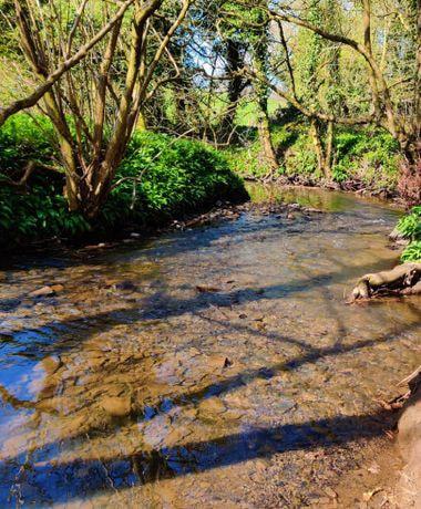 Nan Whins Wood (Sykes Wood) Pudsey Beck