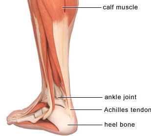 4fc0ab45ab The best ways to Handle Achilles Tendinopathy Achilles tendinopathy is a  condition that triggers discomfort, swelling, stiffness and weak point of  the ...