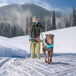 Winter's Next-Best Adventure: Skijoring with Your Dog
