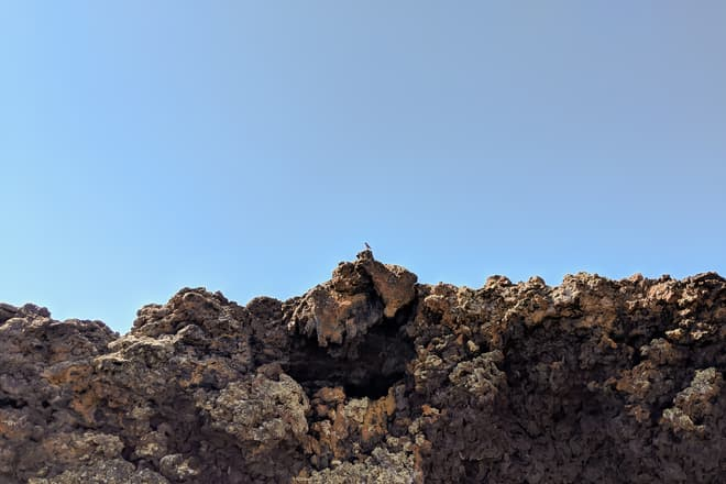 A small blue and white bird perches on the rim of a volcanic crater.