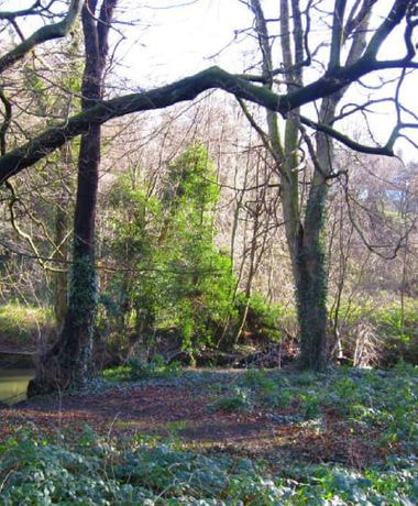 Wykebeck Woods