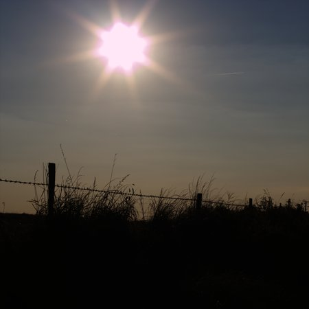 Sun and Fence 12751
