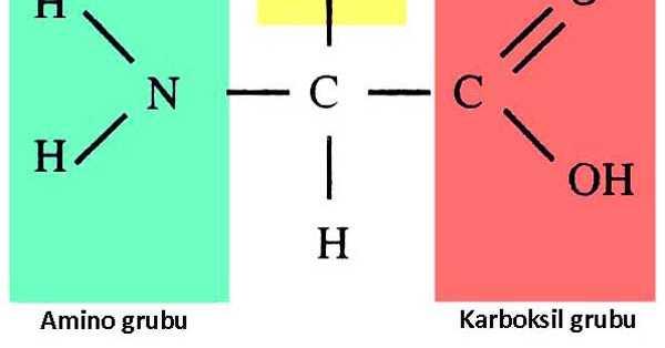 Çok Fonksiyonlu Bileşikler: Aminoasitler ve Karbonhidratlar