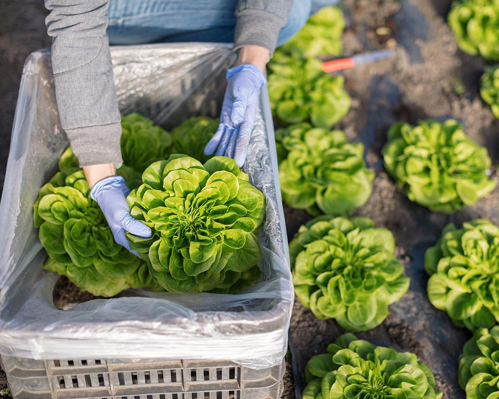 Hydroponics - The Future Of Farming