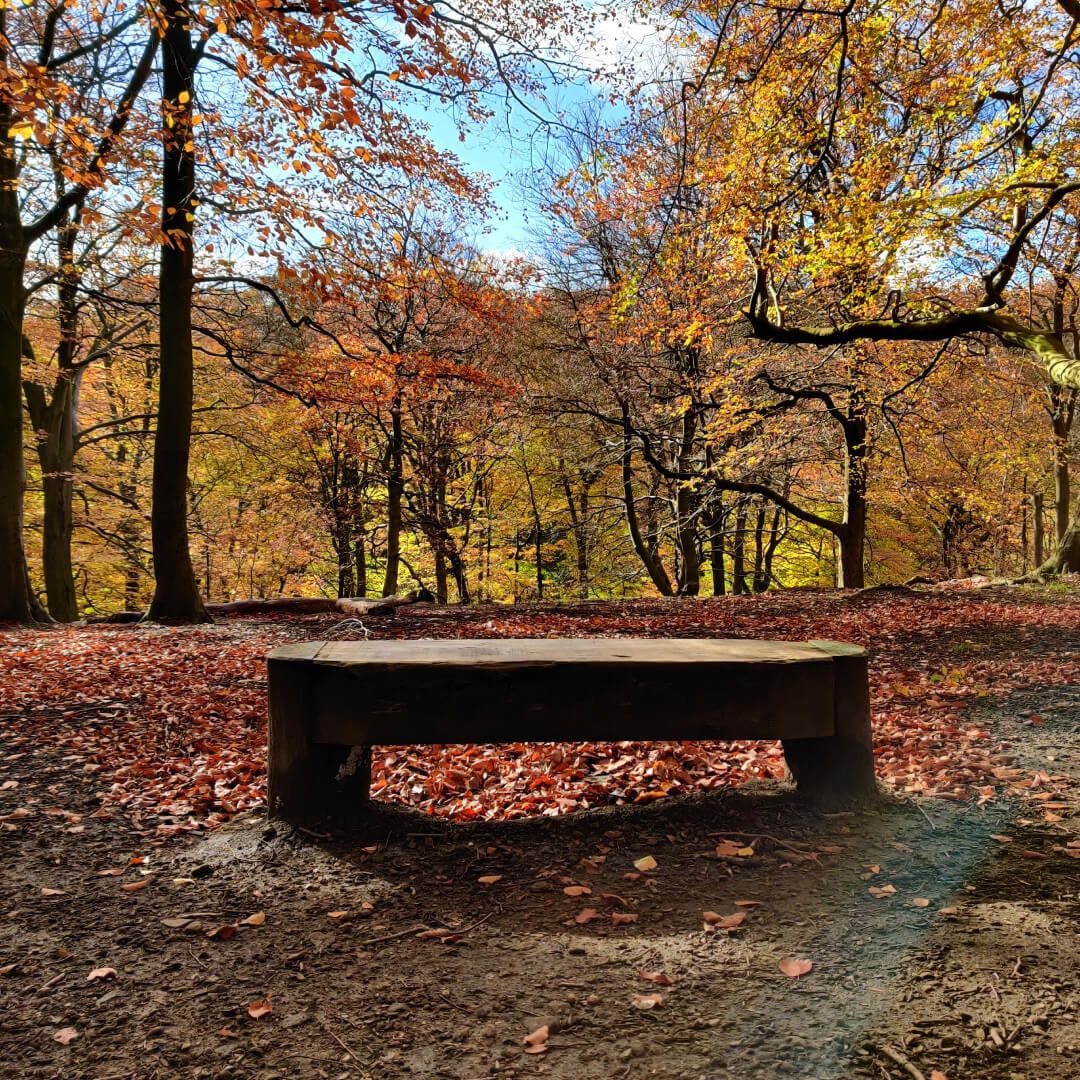 Gledhow Valley Woods bench at top of gill