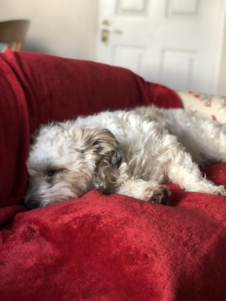 A very sleepy Winnie on one of her blankets