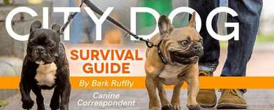 5 City Survival Tips for Dogs