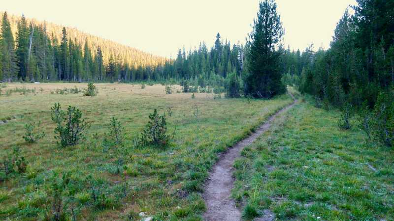 a long meadow in Cold Canyon