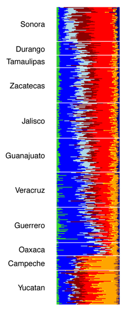 Admixture in selected Mexican states